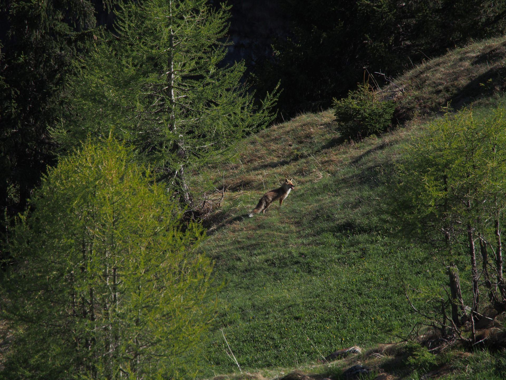 Ab Donnerstag 23. Mai: Jagdschiessanlage zum Training geöffnet
